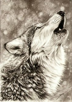 236x332 Pin By Harika Boli On To Draw List Wolf, Animal