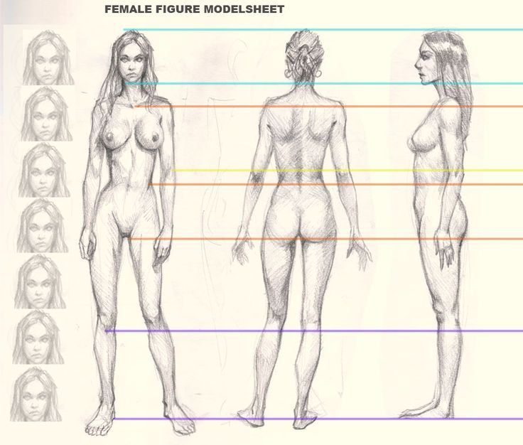 736x626 How To Draw Woman Figure Drawing Athletic Women