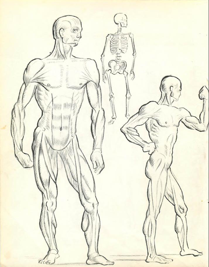 714x914 How To Draw The Human Figure Drawing Body Head Facial Features