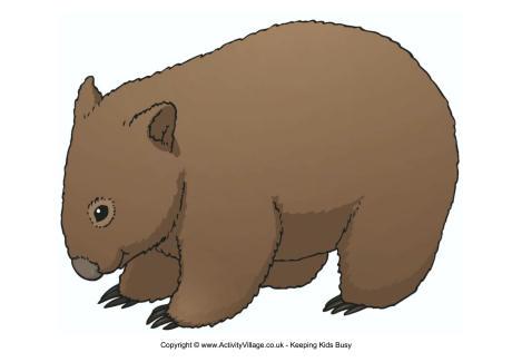 Wombat Drawing At GetDrawings