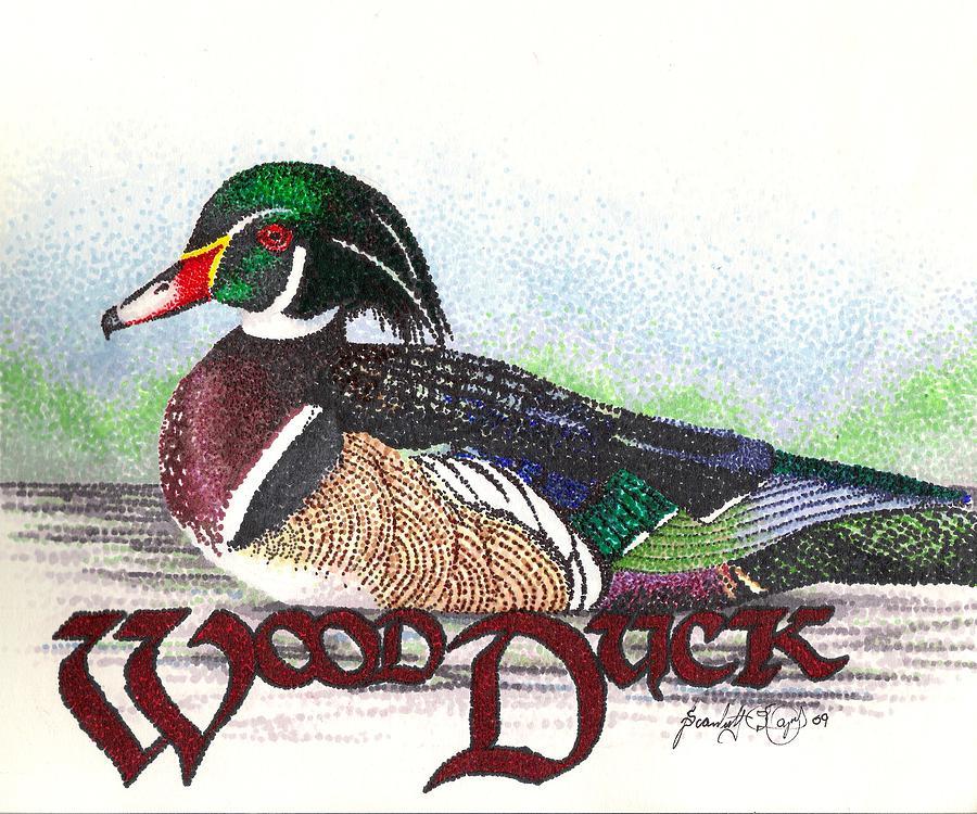 900x750 Wood Duck Drawing By Scarlett Royal