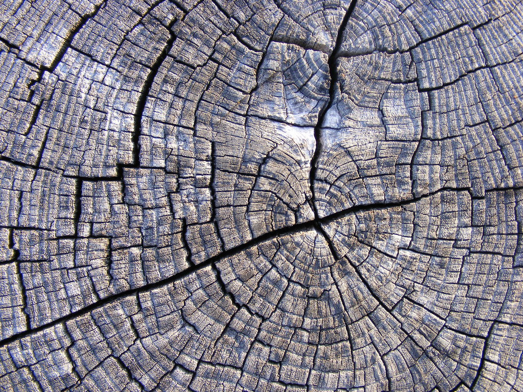 1024x768 Tree Wood Texture 14 This Work Has Been Released By