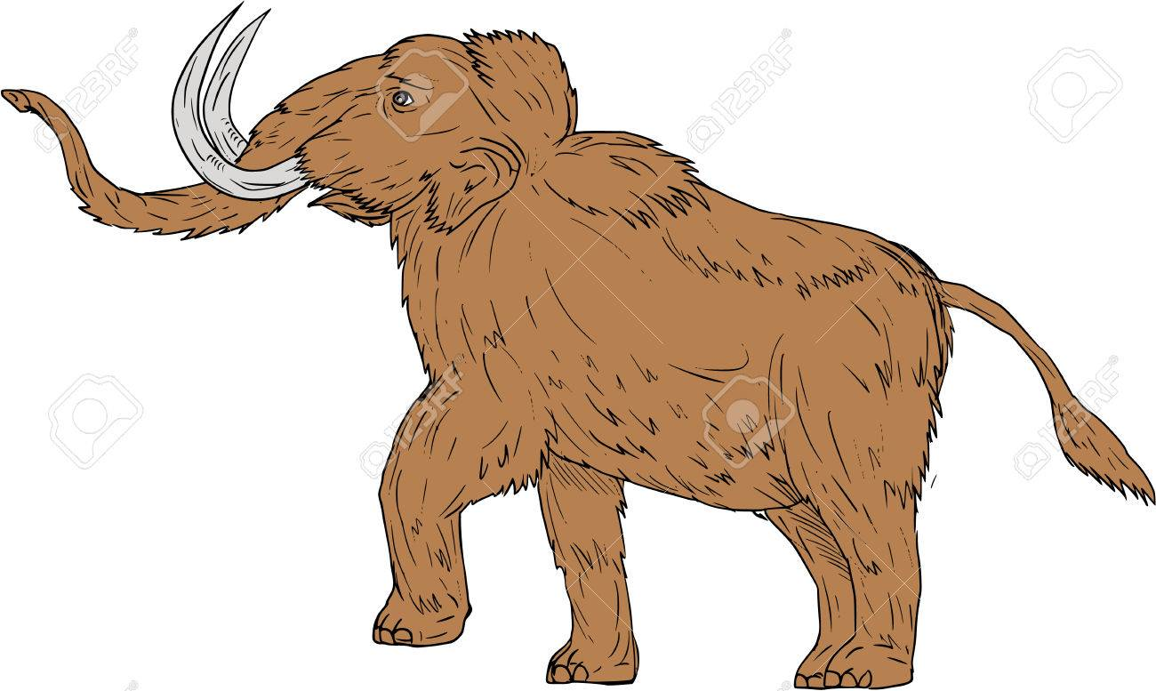1300x777 Drawing Sketch Style Illustration Of A Woolly Mammoth, Mammuthus