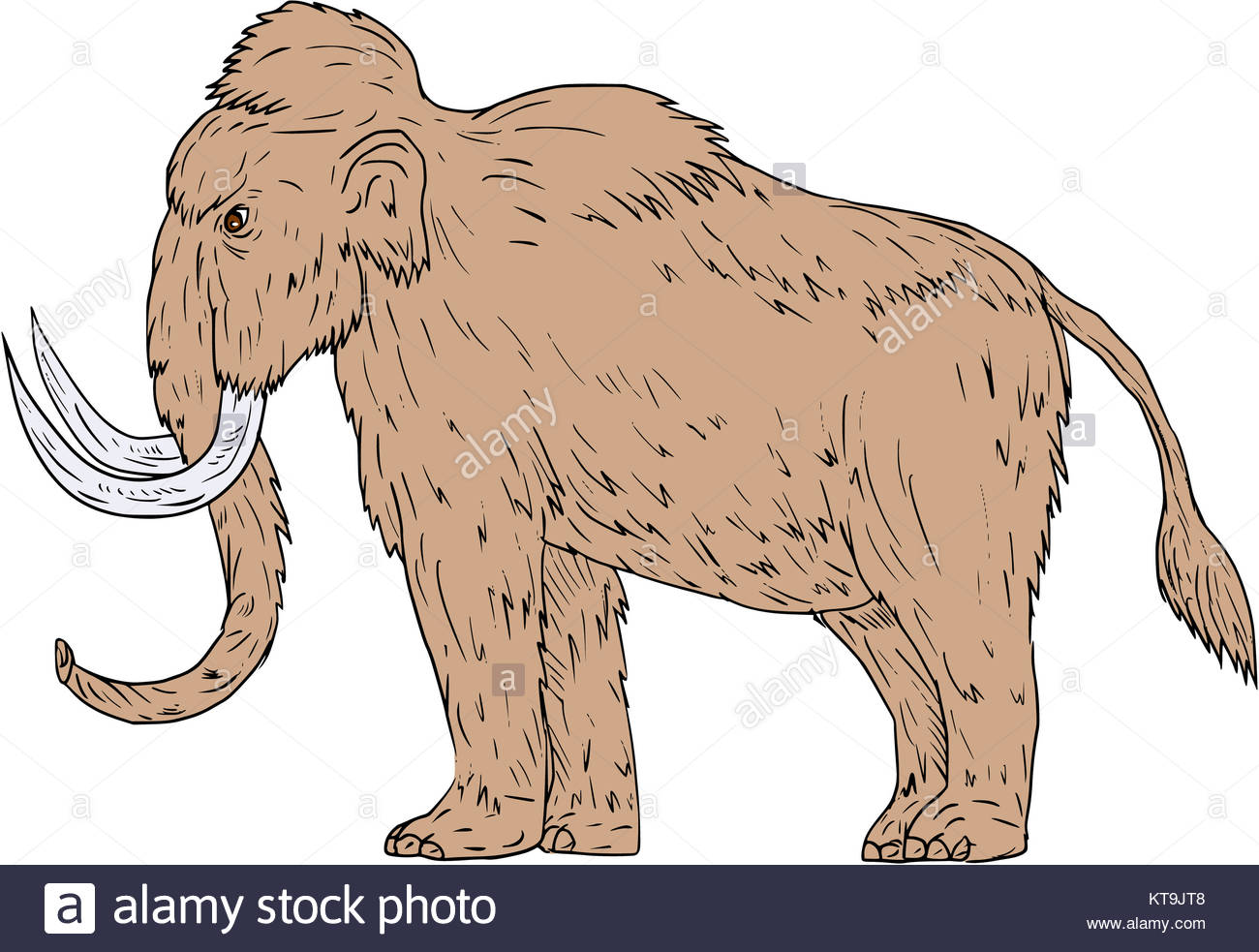 1300x983 Woolly Mammoth Side Drawing Stock Photo, Royalty Free Image
