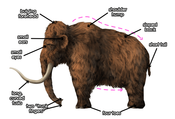 600x408 Woolly Mammoth Education Outdoors