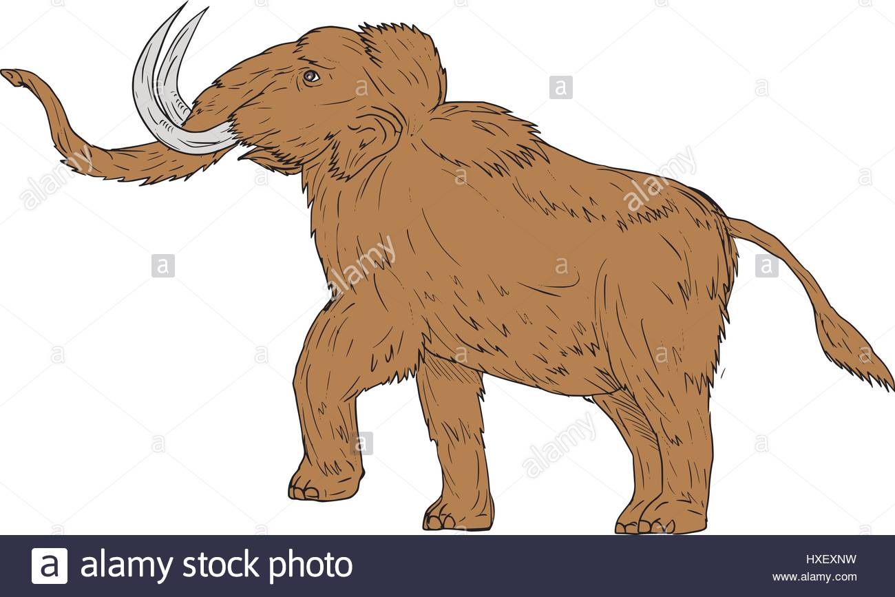1300x867 Drawing Sketch Style Illustration Of A Woolly Mammoth, Mammuthus