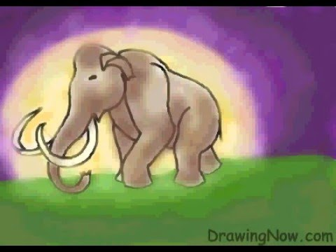 480x360 How To Draw Woolly Mammoth