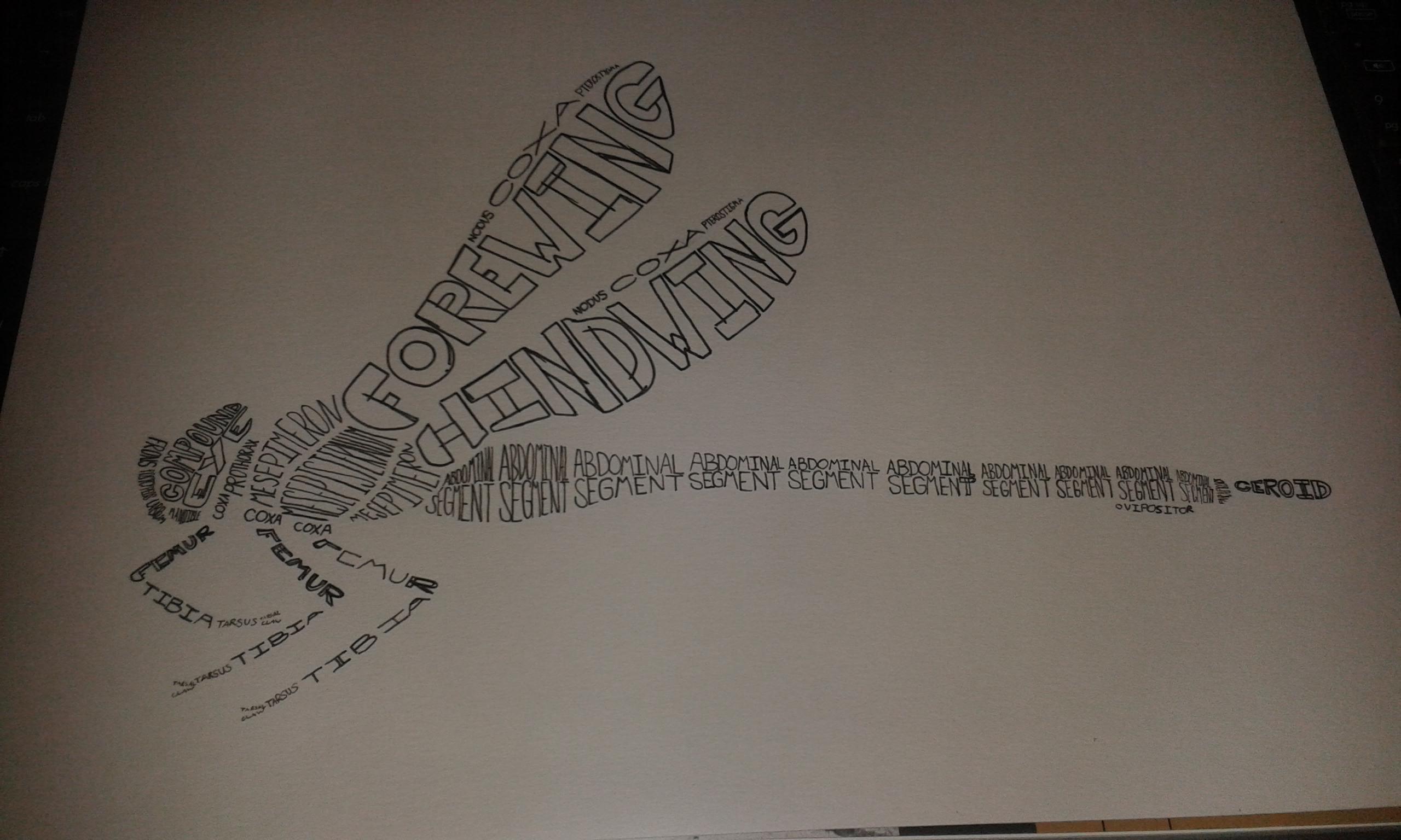 2560x1536 Word Art Anatomy How Do I Do It Beneath The Boughs