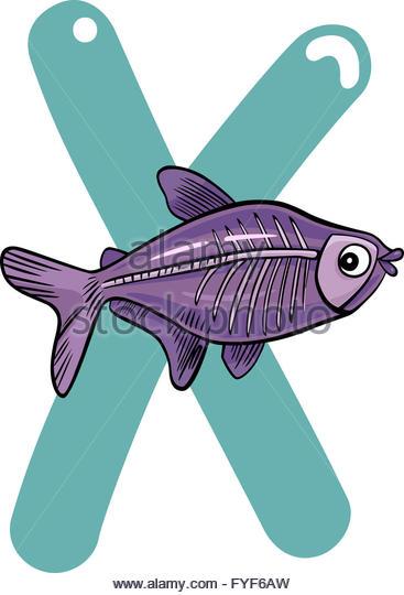 367x540 X Ray Fish Stock Photos Amp X Ray Fish Stock Images