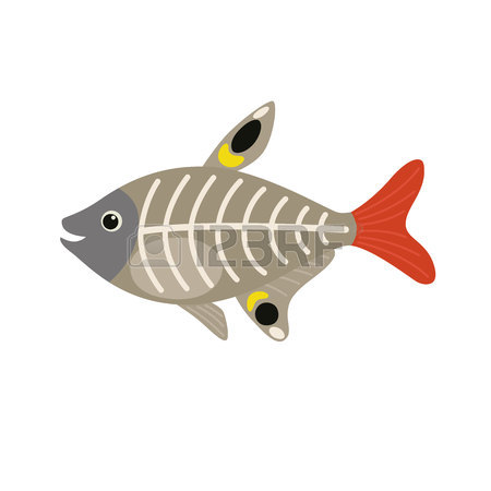 450x450 X Ray Fish Stock Photos. Royalty Free Business Images