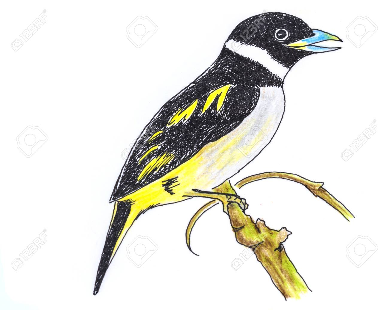 1300x1037 The Original Drawing Of Birds On White Paper, Black And Yellow