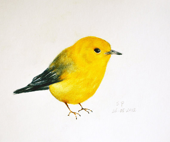 570x475 Yellow Bird 3
