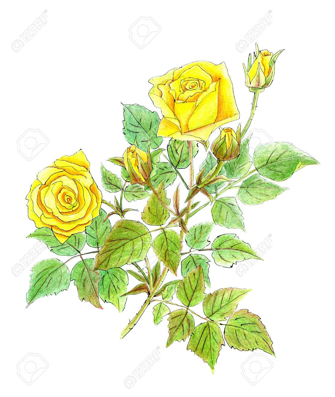 Yellow Flower Drawing at GetDrawings.com | Free for personal use ...