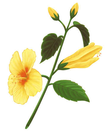 Yellow flower drawing at getdrawings free for personal use 443x626 simple yellow flowers drawing with white background vector free 361x450 stock illustration mightylinksfo