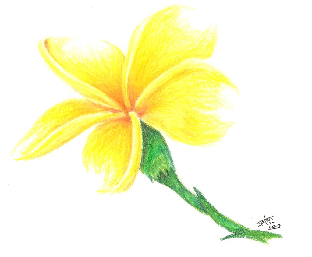 Yellow flower drawing at getdrawings free for personal use 1024x844 yellow flower drawing drawn flower yellow mightylinksfo