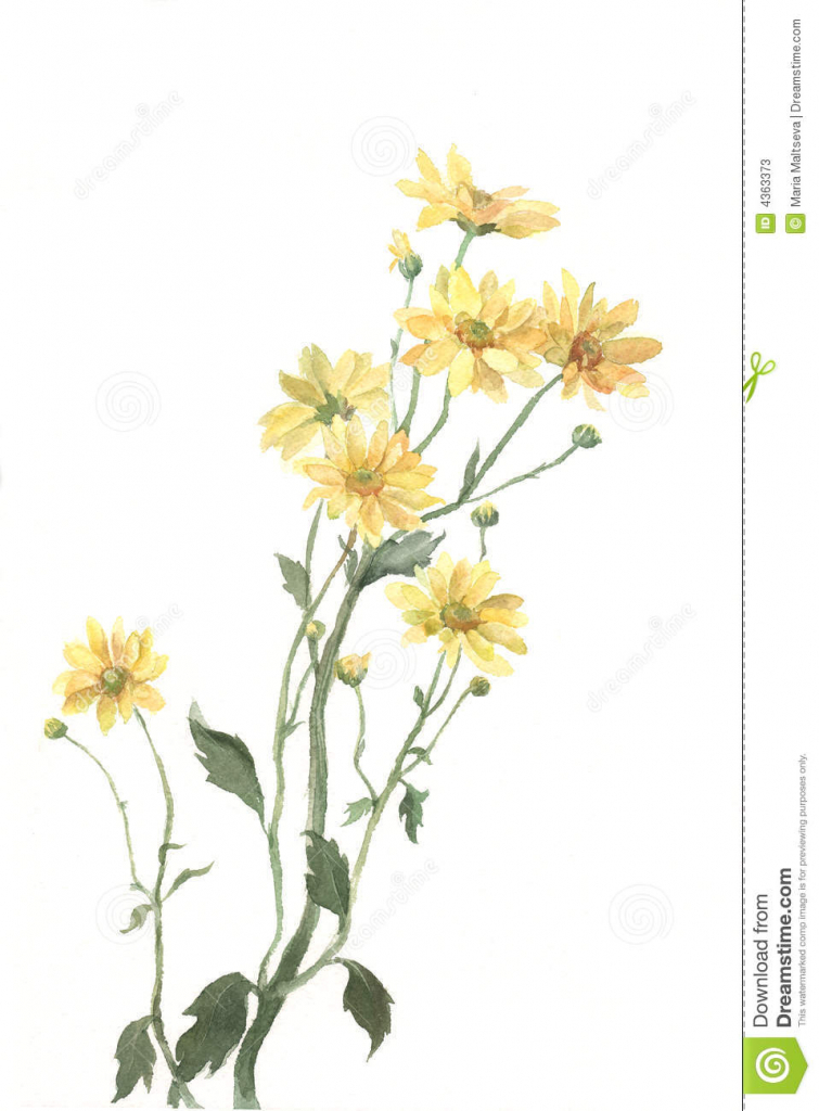 Yellow flower drawing at getdrawings free for personal use 755x1024 yellow flower drawing yellow chrysanthemum flowers watercolor mightylinksfo