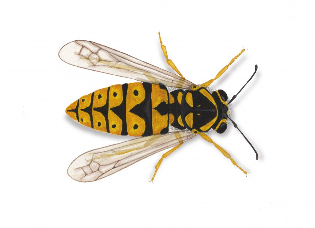 1024x742 Fine Art Drawings For Rentokil Pest Guides