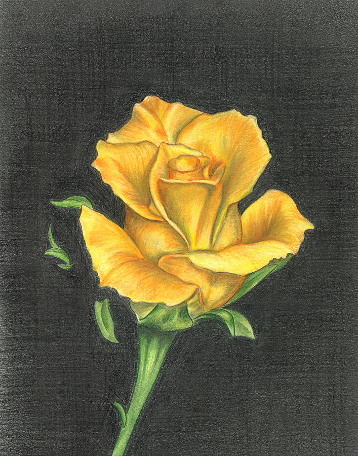Yellow rose drawing at getdrawings free for personal use 707x900 yellow rose drawing by troy levesque mightylinksfo