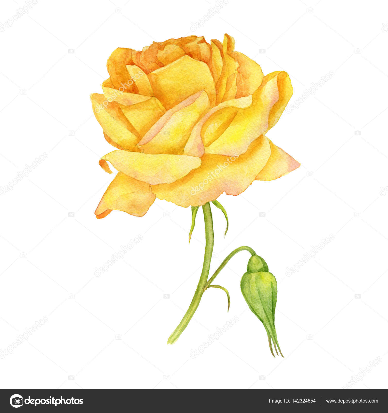 Yellow Rose Drawing At Getdrawings Free For Personal Use