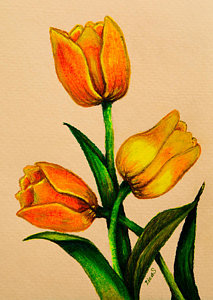 213x300 Yellow Tulip Drawings Fine Art America