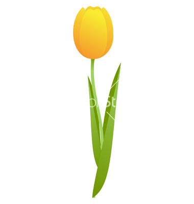 380x400 Yellow Tulip Drawing Tattoos Yellow Tulips And Tattoo