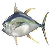 200x200 Drawing Yellowfin Tuna Desktop Background Wallpaper Tuna