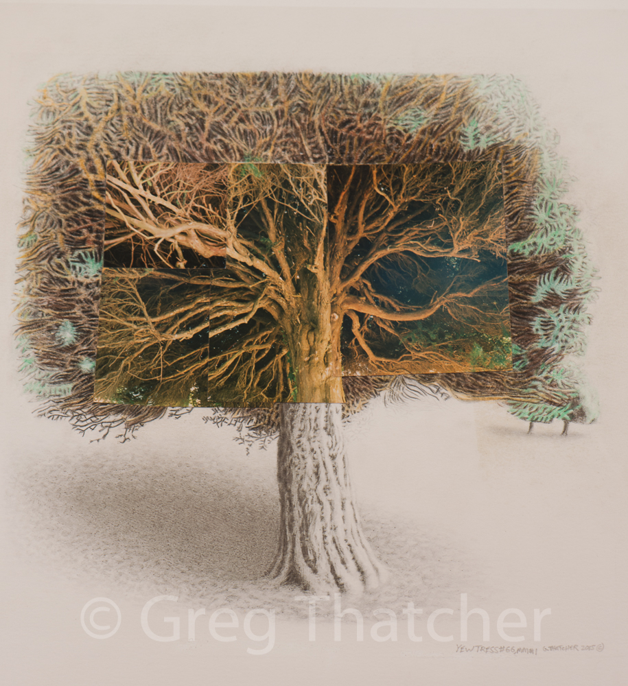 915x1000 Greg Thatcher Gallery Greg Thatcher Art Gallery Yew Tree