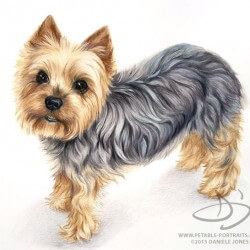 250x250 Dog Portraits Dog Drawing Portraits Paintings, Charcoal