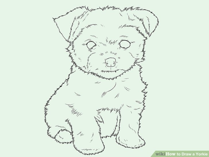 728x546 How To Draw A Yorkie (With Pictures)
