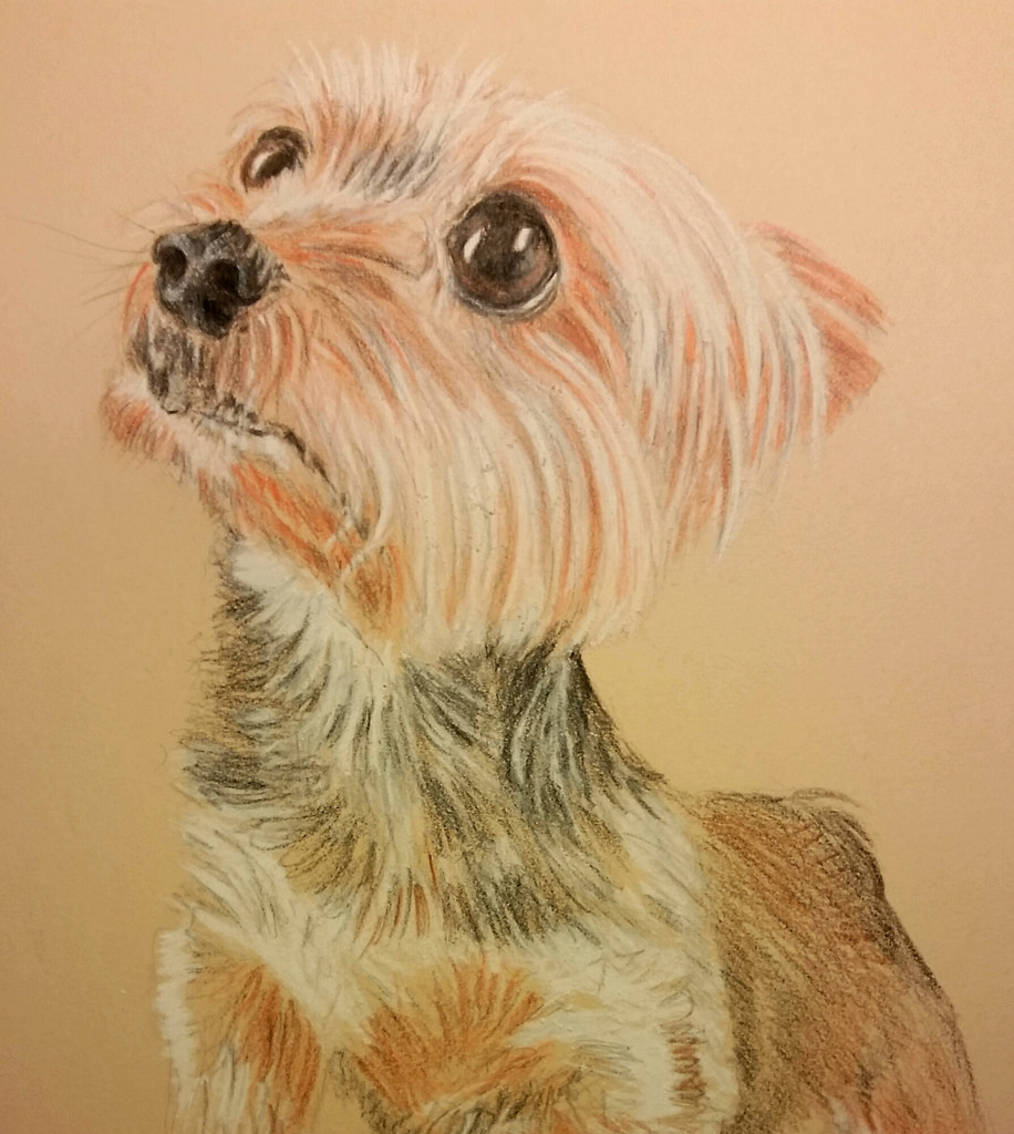 916x1024 Finished A Yorkie Drawing Instead Of Watching The Super