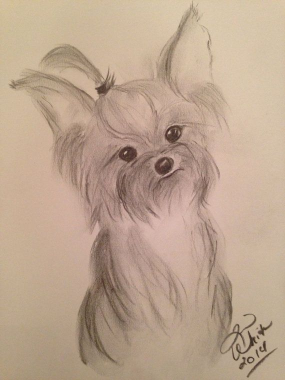570x760 Original Charcoal Drawing Of A Yorkie 11x14 Rendered On High