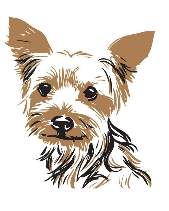 teddy yorkshire terrier