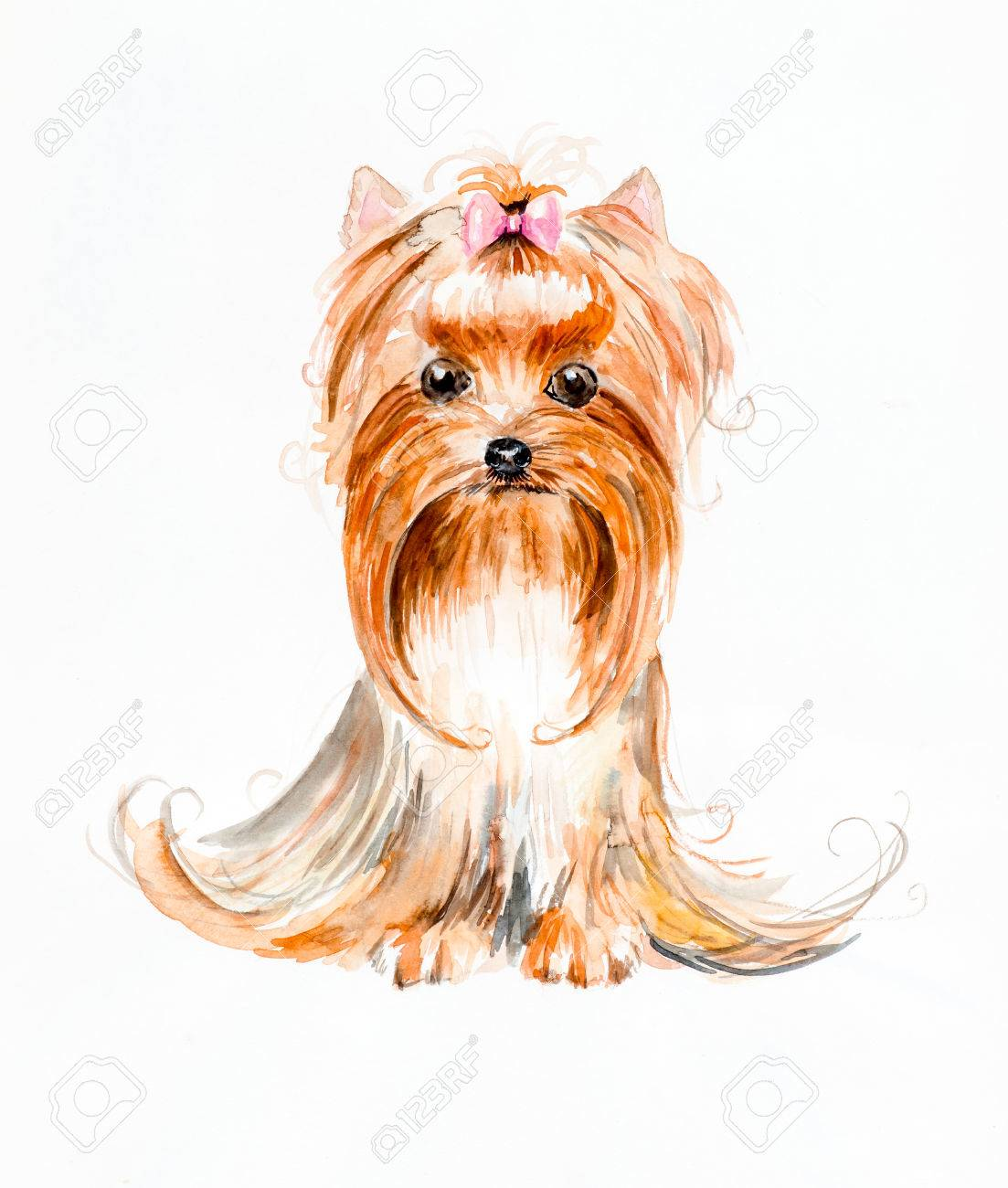 1103x1300 Dog With A Hood. Yorkshire Terrier. Pink Bow And Hair Dress