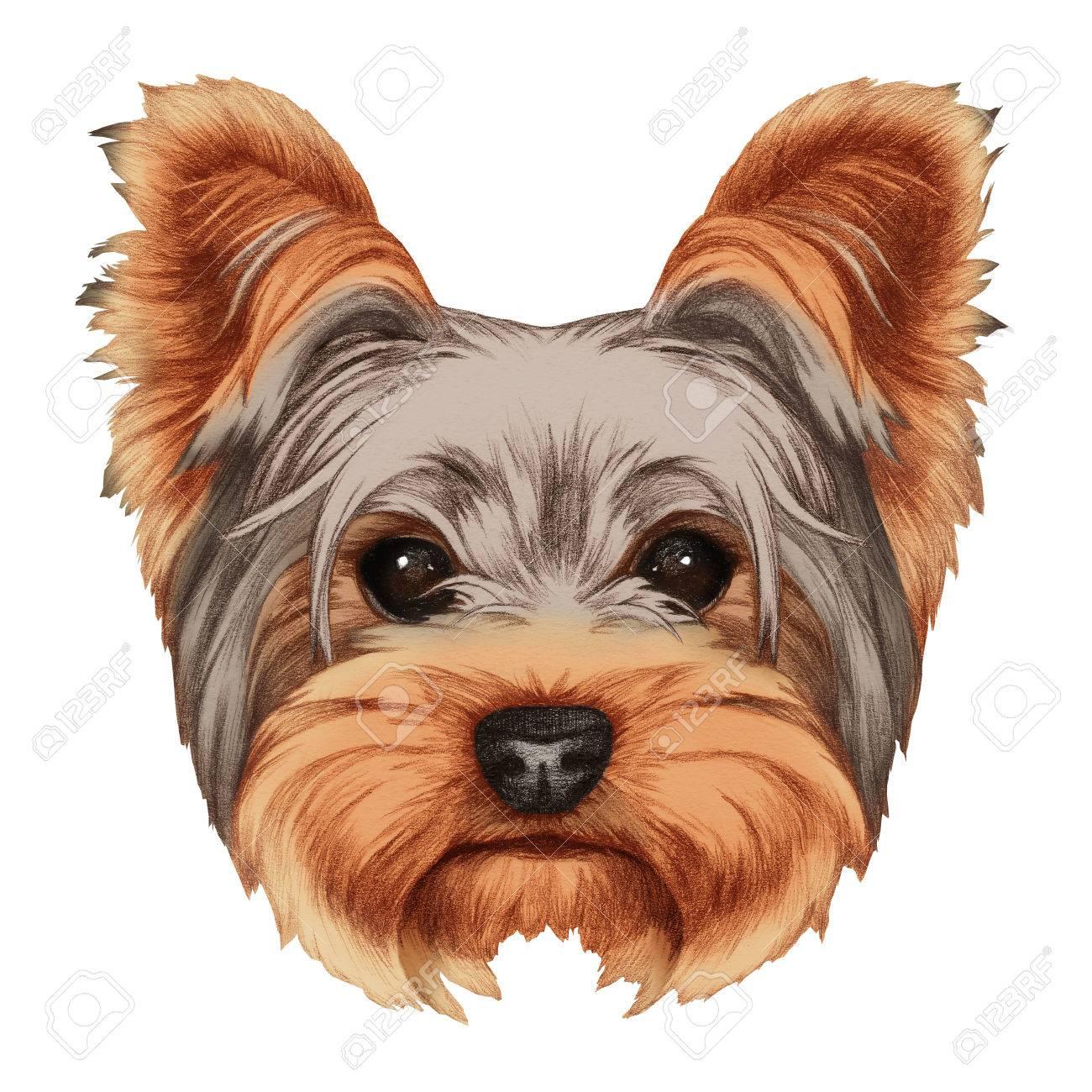 1300x1300 Portrait Of Yorkshire Terrier Dog. Hand Drawn Illustration