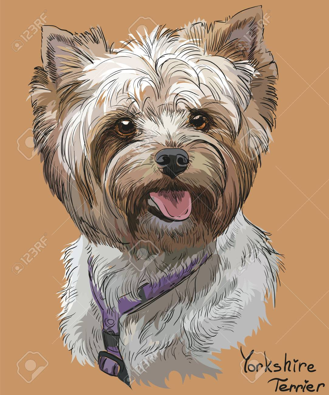 1083x1300 Vector Portrait Of Yorkshire Terrier In Diferent Color Hand