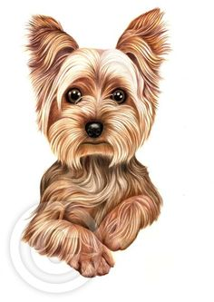 236x333 Yorkshire Terrier (1) Yorkie Dog Limited Edition Pencil Drawing