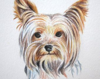 340x270 Yorkie Dog Colored Pencil Drawing, Original Yorkshire Terrier
