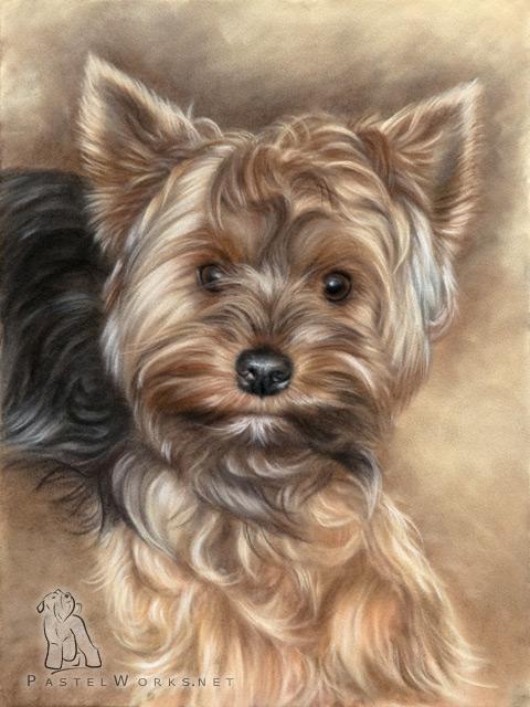 480x640 Yorkshire Terrier Drawing Pet Portraits Amp Animal Art
