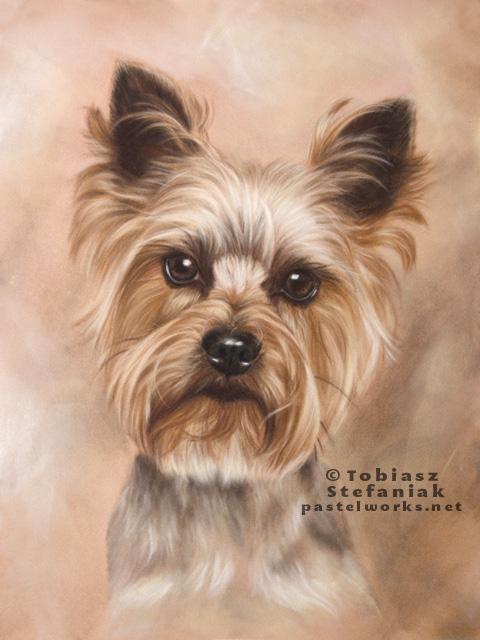 480x640 Yorkshire Terrier Portrait Pet Portraits Amp Animal Art
