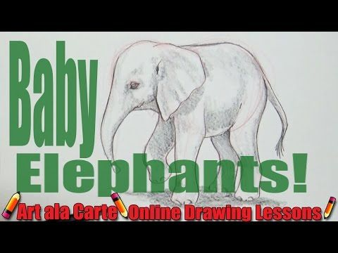 480x360 Drawing A Baby Elephant