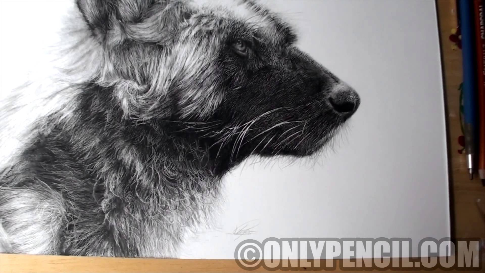 1920x1080 African Wild Dog Pencil Drawing