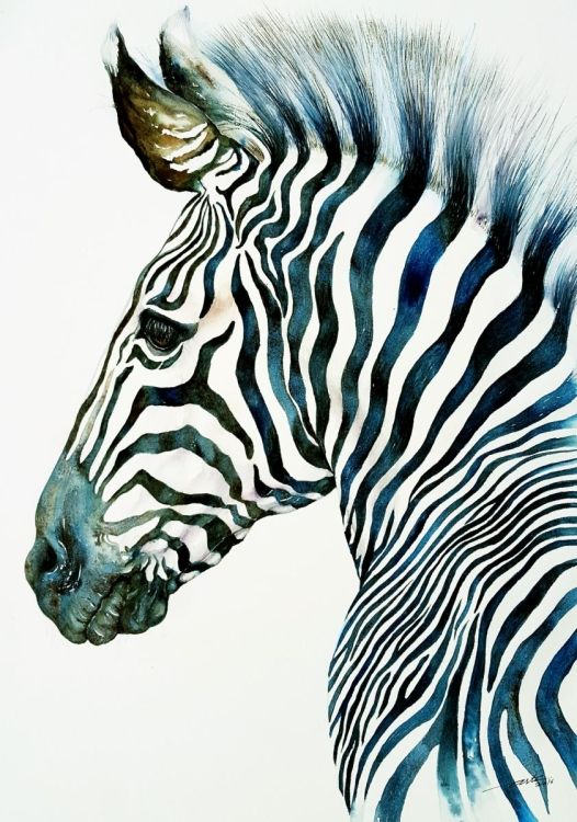 526x750 Midnight Blue Zebra Midnight blue, Watercolor and Animal