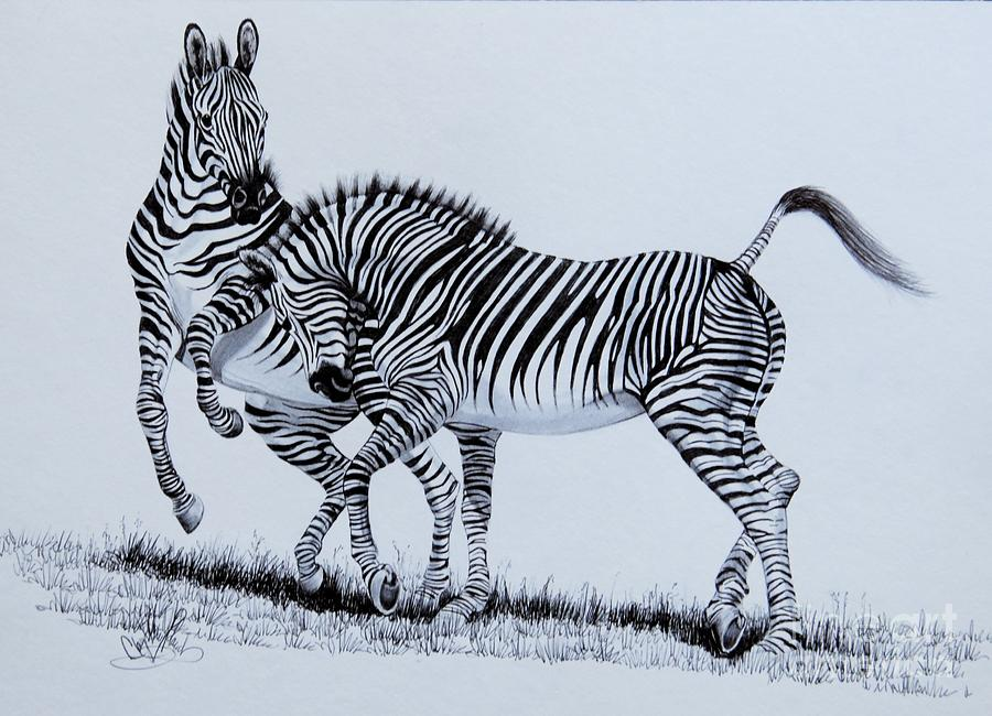 900x650 Zebra Play Drawing by Cheryl Poland