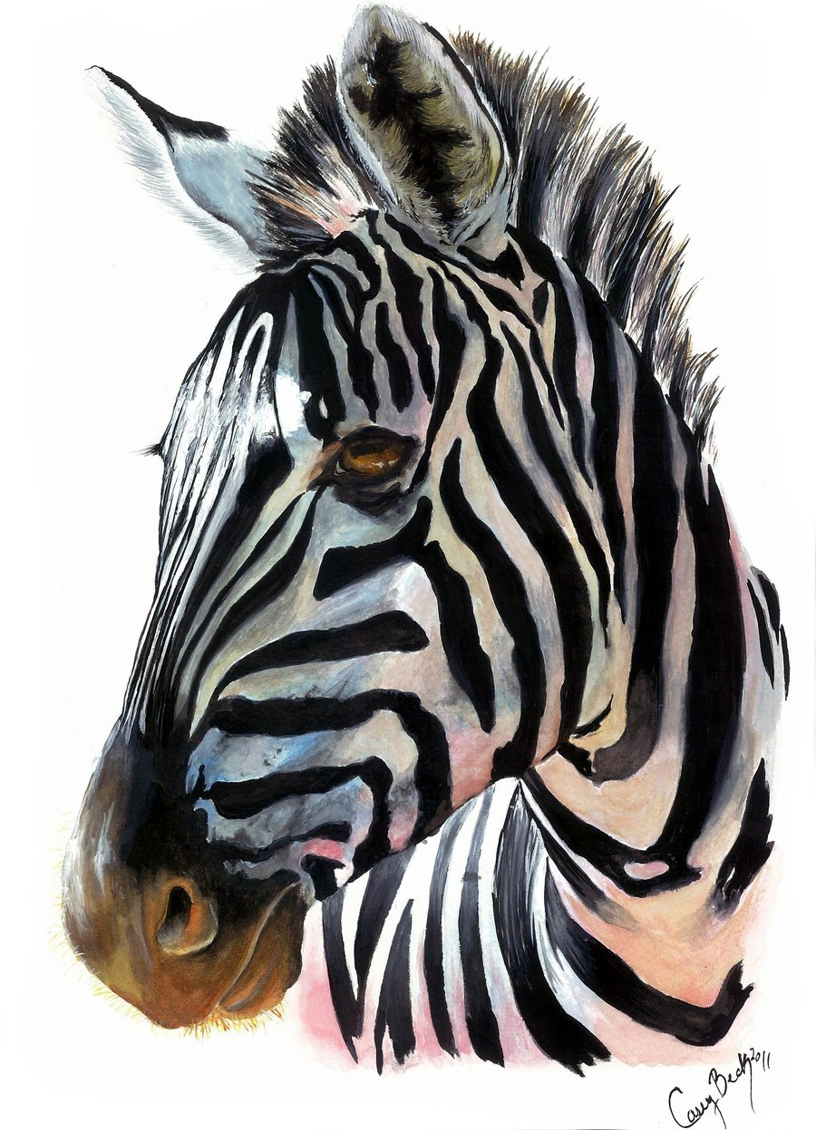 900x1247 Zebra by on @deviantART Zebras