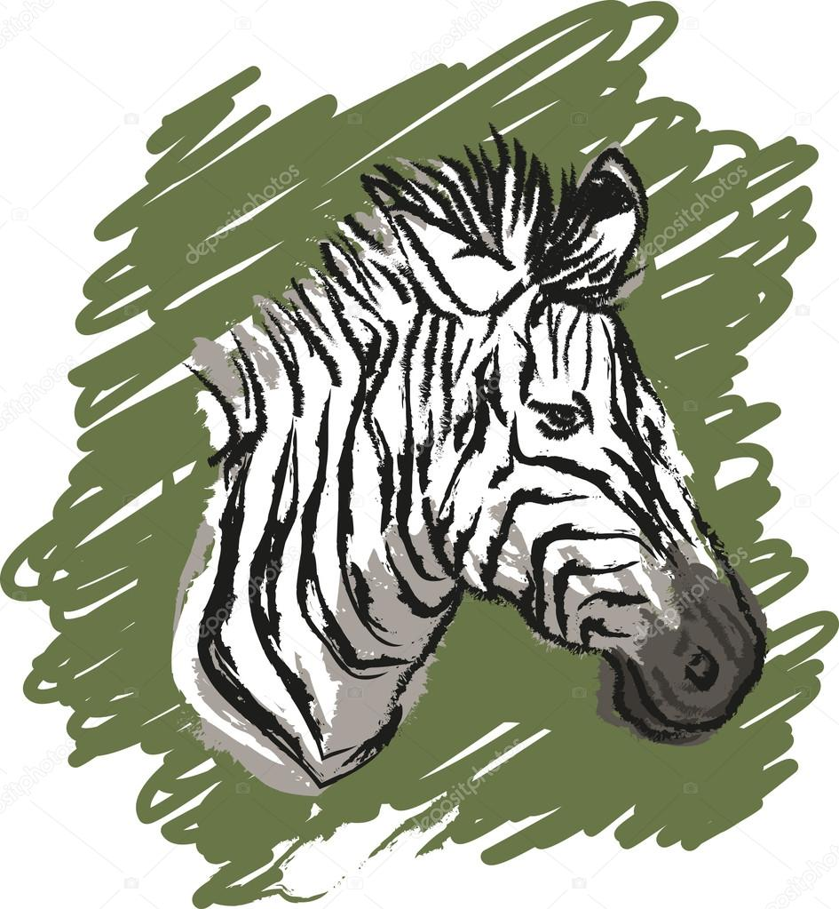 945x1023 Zebra sketch drawing Stock Vector © Lukaves