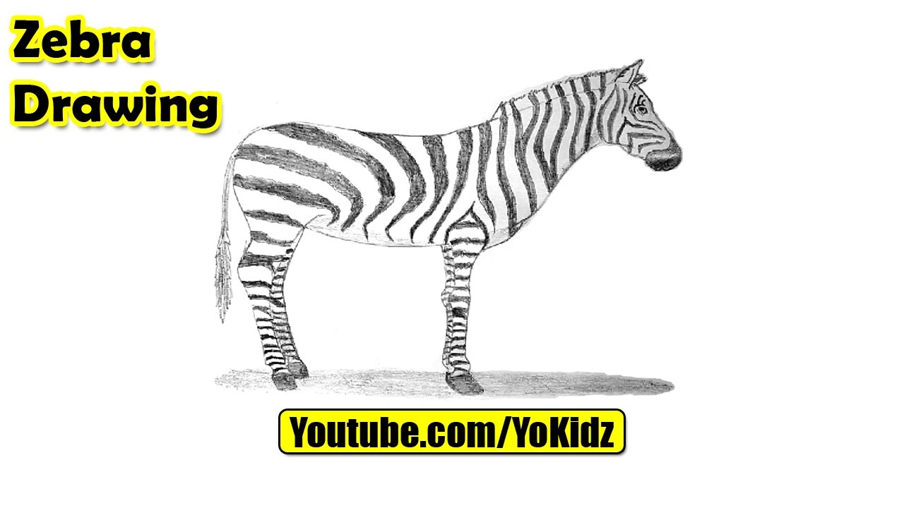 1280x720 How To Draw A Zebra For Kids