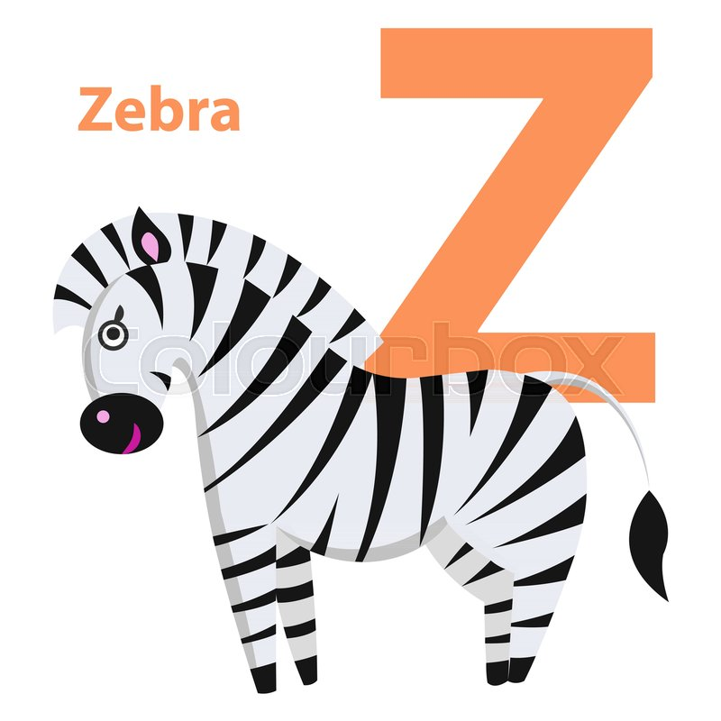 800x800 Orange Letter Z With Word Zebra On Alphabet Card. Black And White