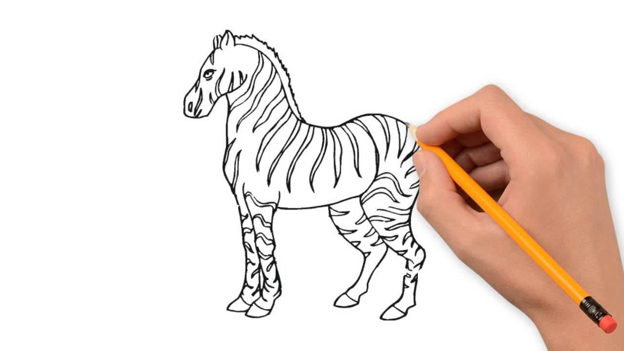 1280x720 Zebra Animals Pencil To Draw Step By Step