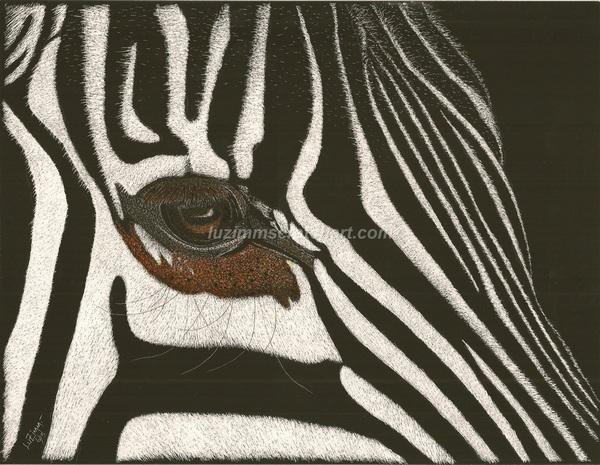 600x465 Wildlife Zebra's Face Close Up