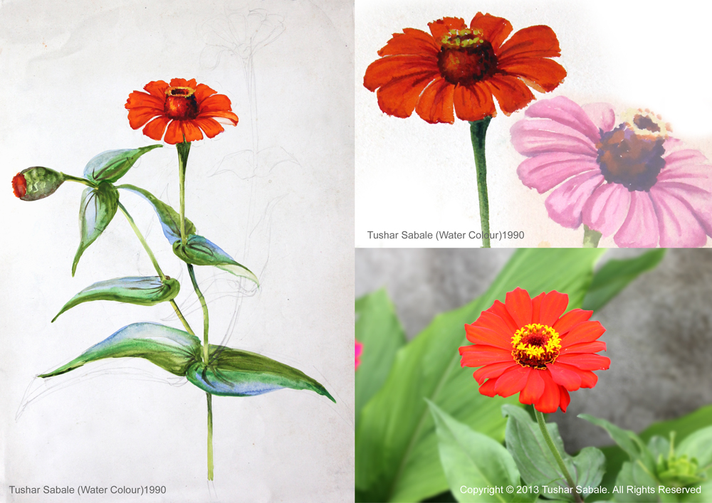 Coloring Pages Zinnia : Zinnia flower drawing at getdrawings.com free for personal use